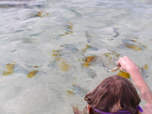 Seth feeding fish in the sea