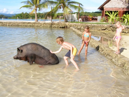 big pig sharing the beach